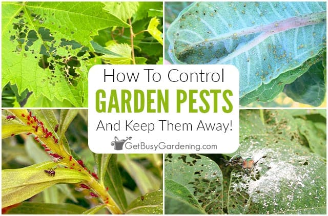 How To Control Garden Pests Naturally