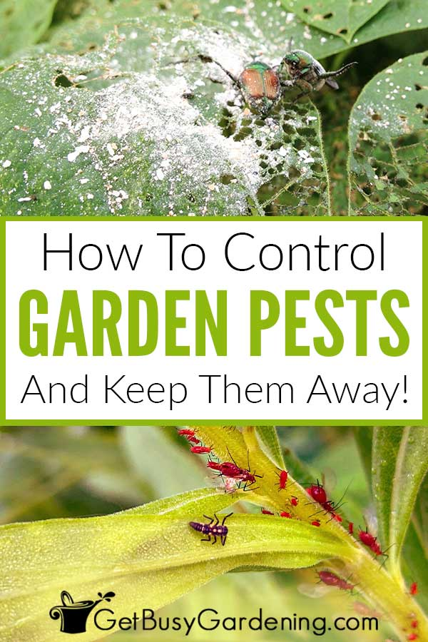 How To Control Gaden Pests And Keep Them Away!