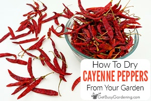How To Dry Cayenne Peppers In 4 Ways For Easy Storage