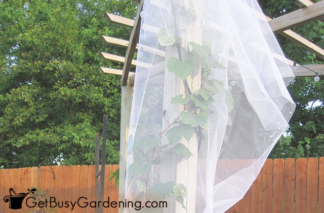Wrapping fabric around grapevines