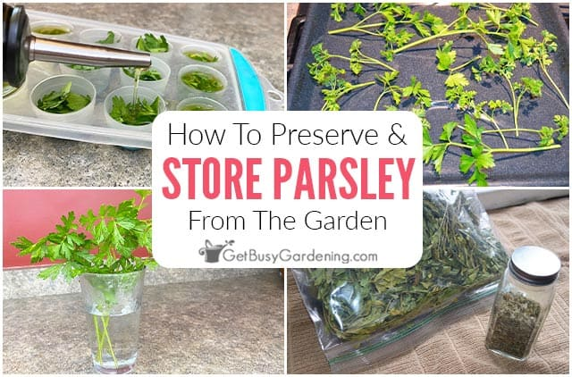 How To Preserve & Store Fresh Parsley