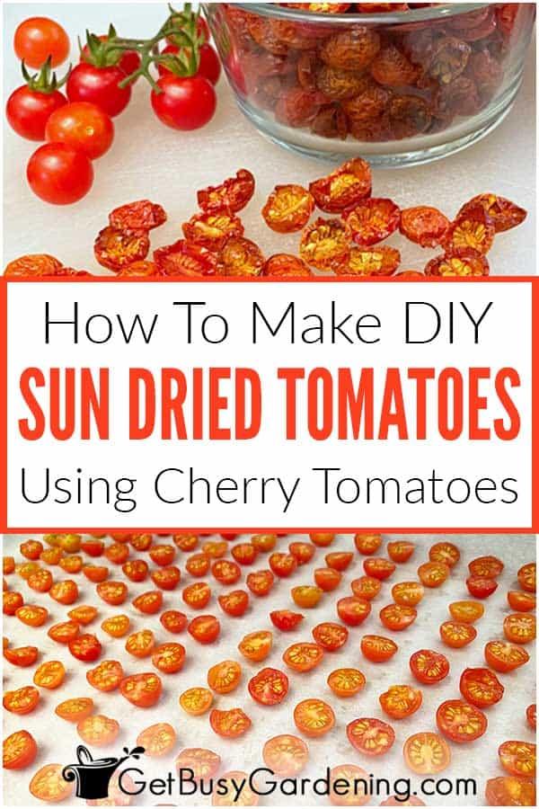 How To Make DIY Sun Dried Tomatoes Using Cherry Tomatoes