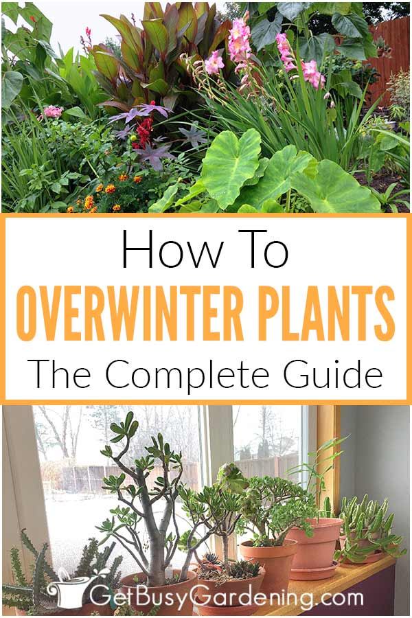 How To Overwinter Plants: The Complete Guide