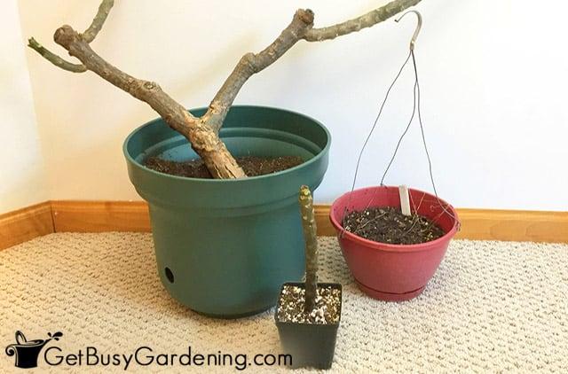 Storing dormant plants for winter