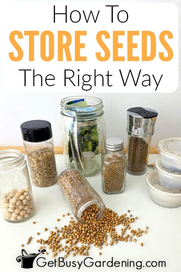 How To Store Seeds The Right Way