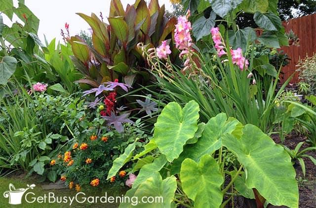 Tropical plants growing in the garden