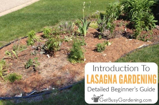 Lasagna Gardening 101: How To Make A Lasagna Garden