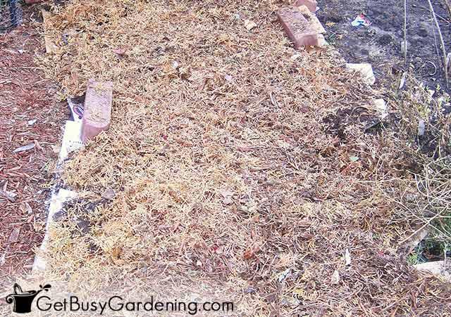 Building up the lasagna garden layers
