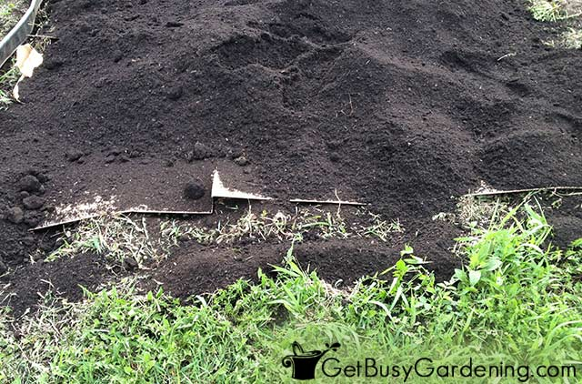 Cardboard layer covered in compost