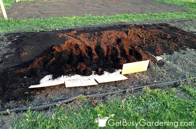 Covering the cardboard with compost