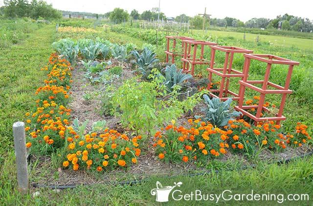 My beautiful no dig vegetable garden
