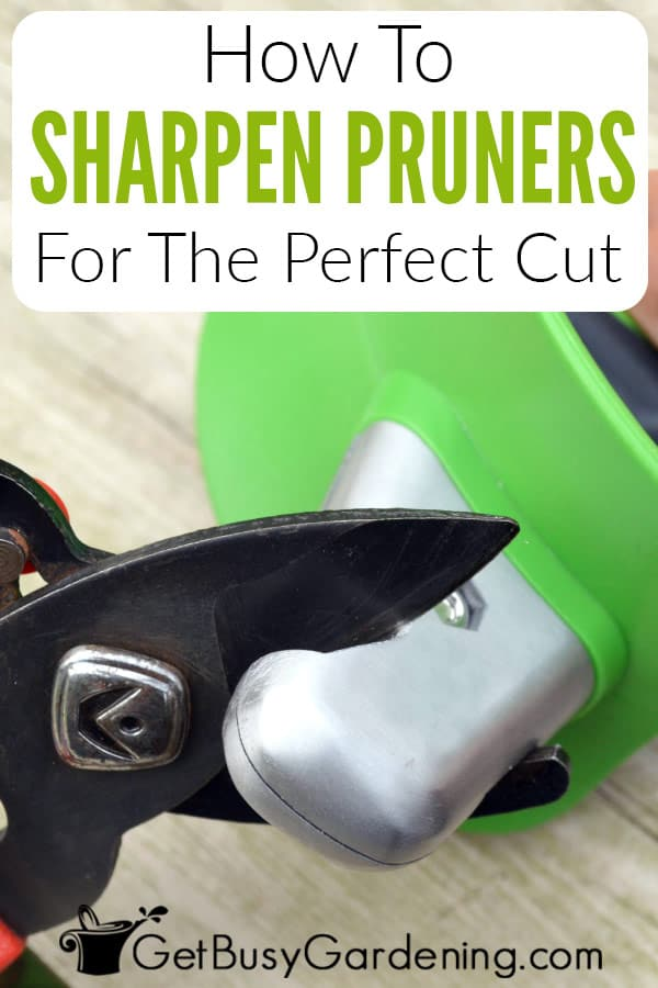 How To Sharpen Pruners For The Perfect Cut