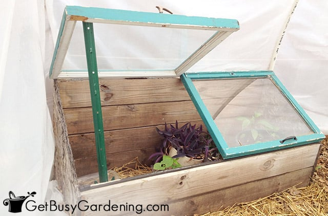 Venting the cold frame on a sunny day