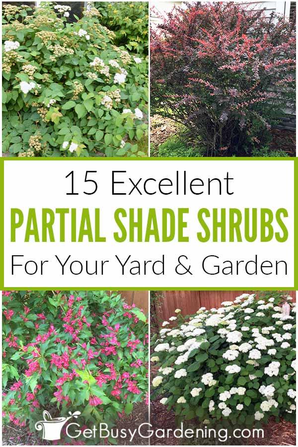 15 Excellent Partial Shade Shrubs For Your Yard & Garden