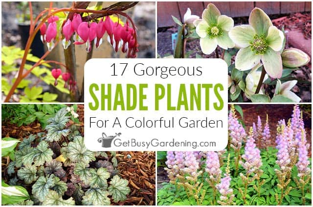 17 Colorful & Gorgeous Shade Garden Plants