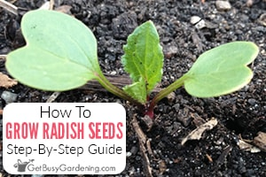 How To Plant & Grow Radishes From Seed