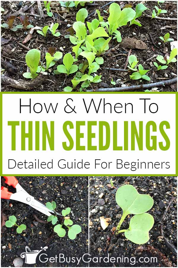 How & When To Thin Seedlings Detailed Guide For Beginners