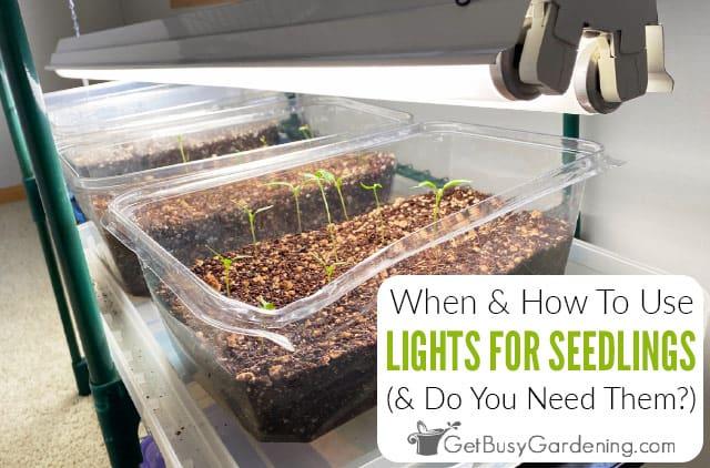 Lighting For Seedlings: When To Put Seedlings Under Light & How Much