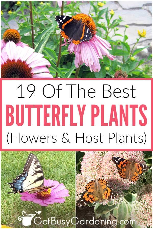 19 Of The Best Butterfly Plants (Flowers & Host Plants)