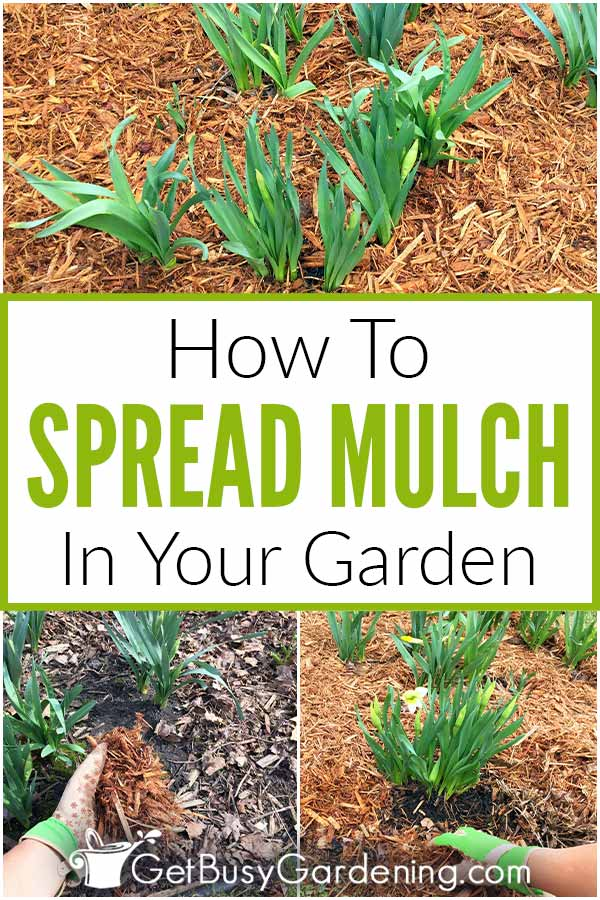 How To Spread Mulch In Your Garden
