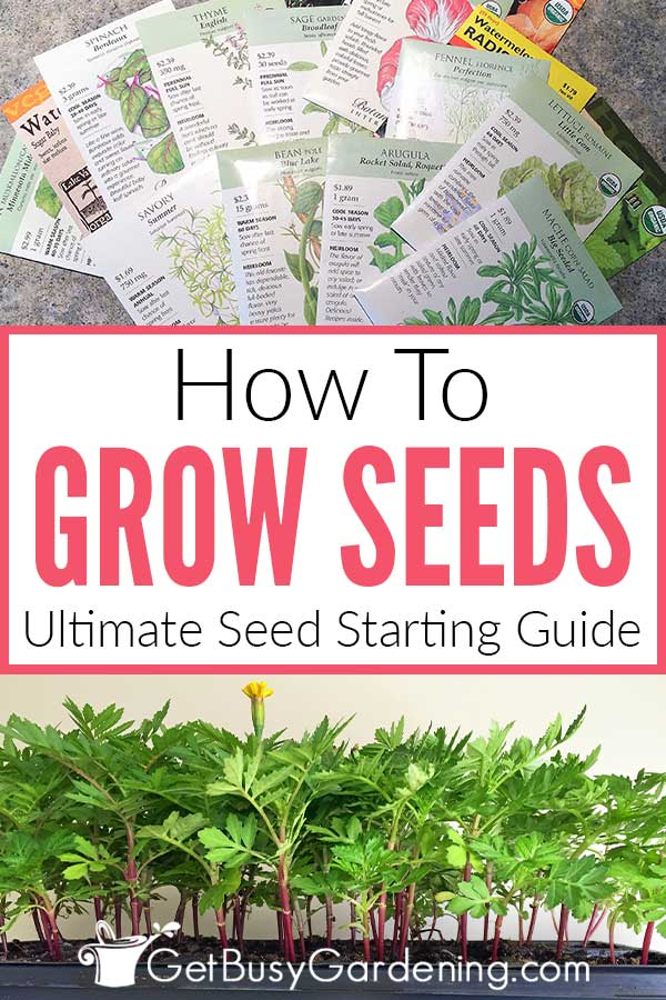 How To Grow Seeds Ultimate Seed Starting Guide