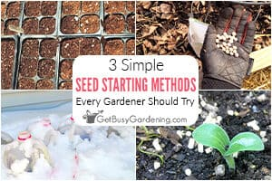 Seed Starting Methods That Every Gardener Should Try