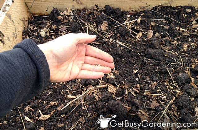 Sowing seeds directly in garden