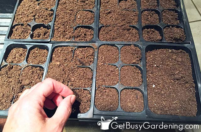 Starting my seeds in trays indoors