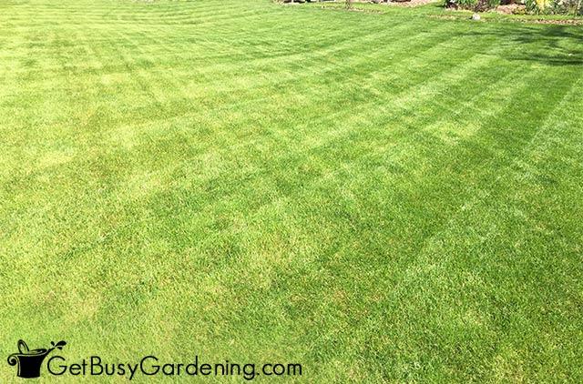 Basic checkerboard lawn pattern