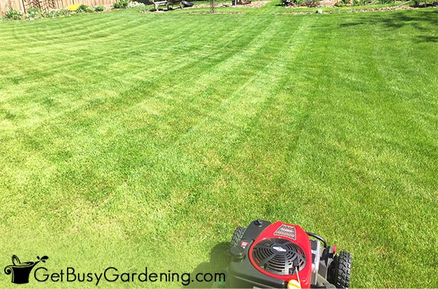 Mowing a criss cross pattern into my lawn