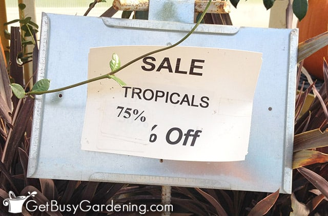 Buying plants on sale for cheap