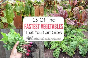 15 Fast Growing Vegetables You Should Plant In Your Garden