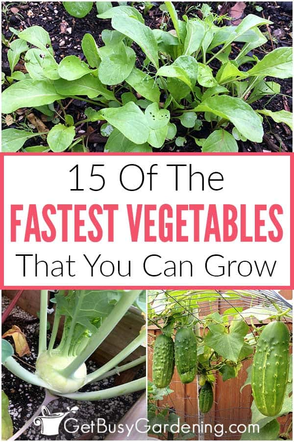 15 Of The Fastest Vegetables That You Can Grow