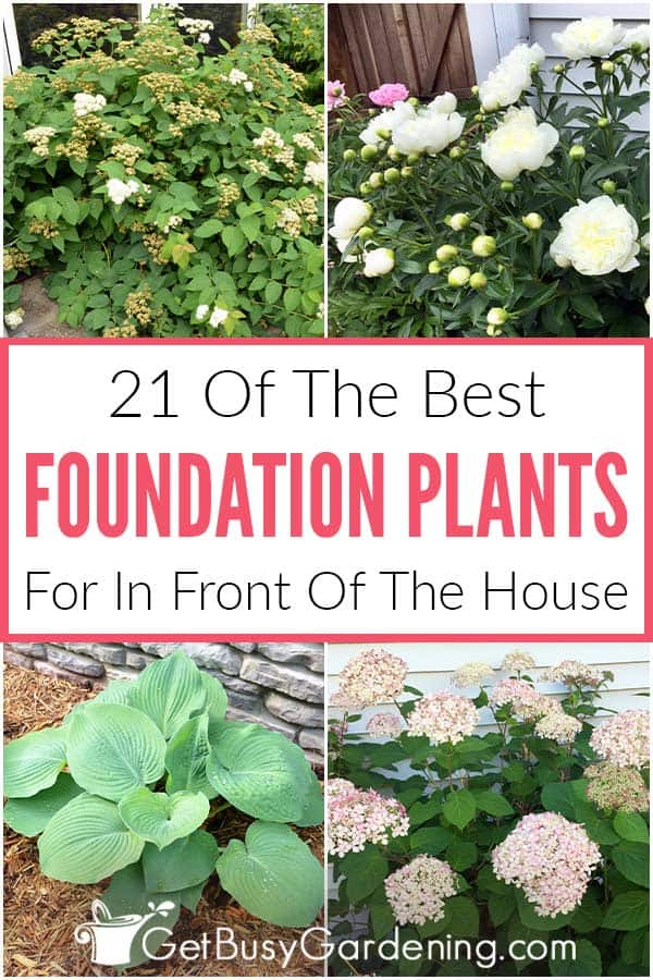 21 Of The Best Foundation Plants For In Front Of The House