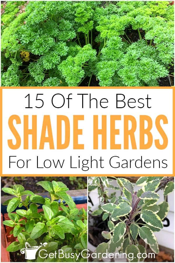 15 Of The Best Shade Herbs For Low Light Gardens