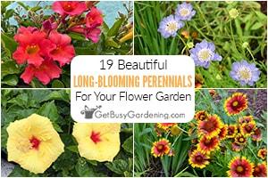 19 Long Blooming Perennials For A More Beautiful Flower Garden