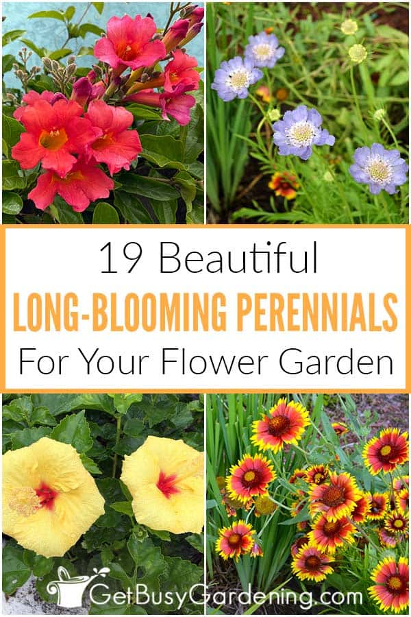 19 Beautiful Long-Blooming Perennials For Your Flower Garden