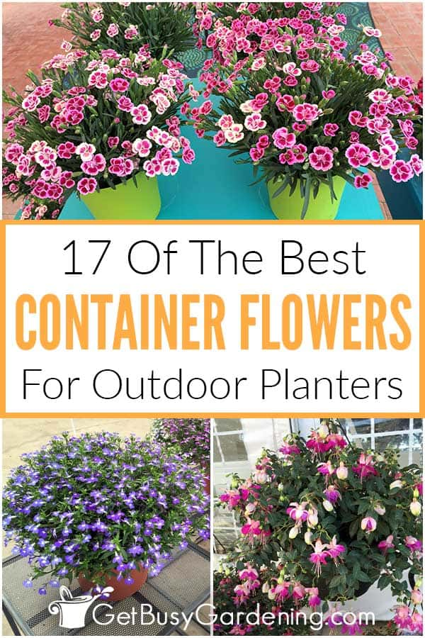 17 Of The Best Container Flowers For Outdoor Planters
