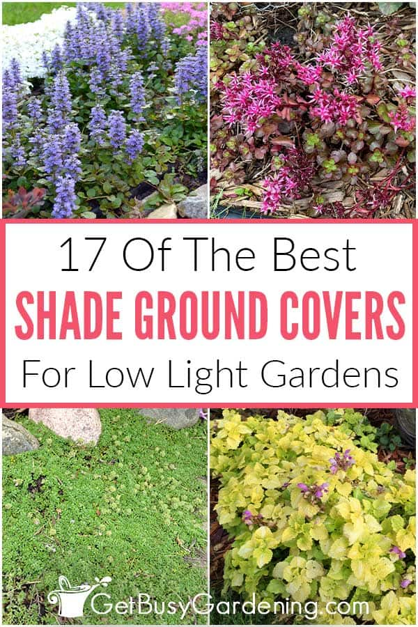 17 Of The Best Shade Ground Covers For Low Light Gardens