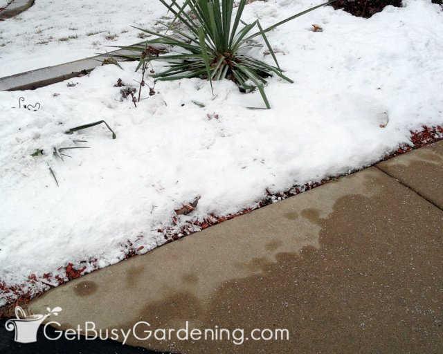 Anbringen von Enteisern auf Gehwegen neben Gartenpflanzen