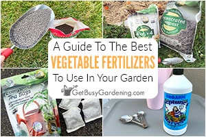 Guide To The Best Fertilizers For Vegetable Gardens