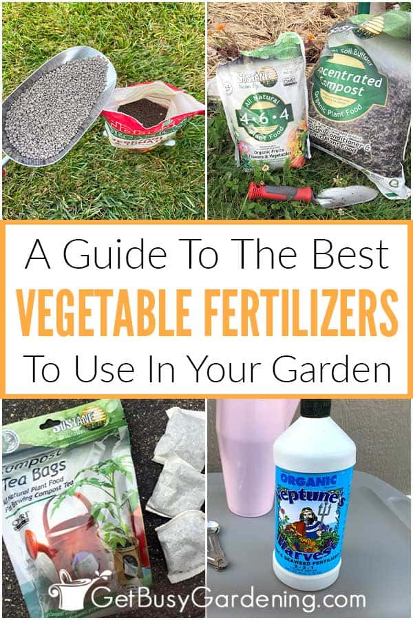A Guide To The Best Vegetable Fertilizers To Use In Your Garden