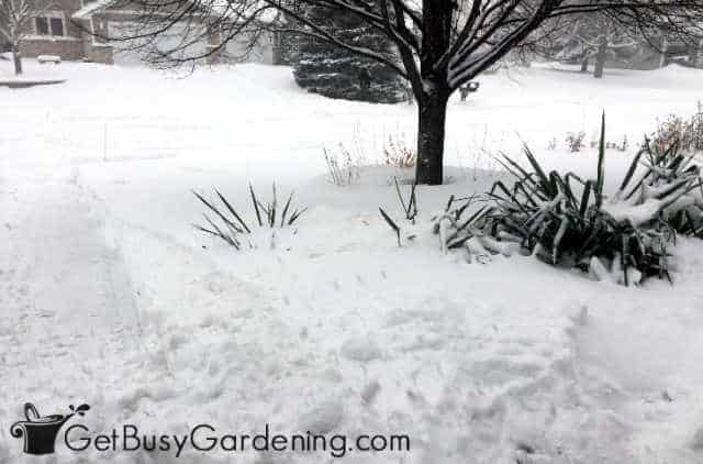 Gardens covered by deep snow in winter