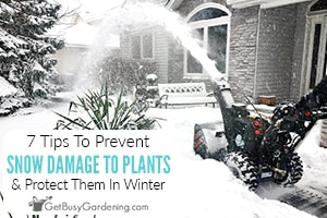 7 Tips For Protecting Plants From Snow Damage