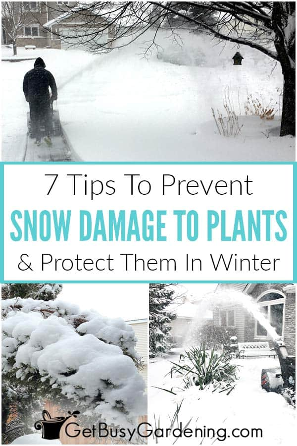 7 Tips To Prevent Snow Damage To Plants & Protect Them In Winter