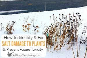 How To Prevent & Fix Salt Damage To Plants