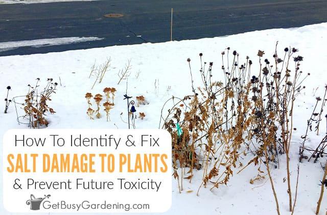 Wie man Salzschäden an Pflanzen verhindert und repariert