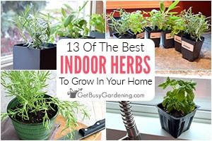 13 Best Herbs To Grow Inside