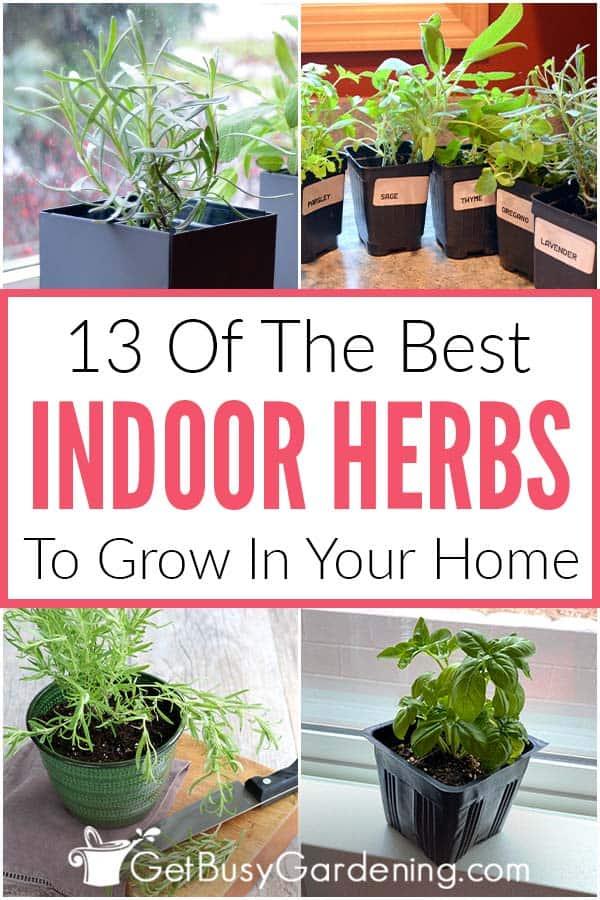 13 der besten Indoor-Kräuter für Ihr Zuhause