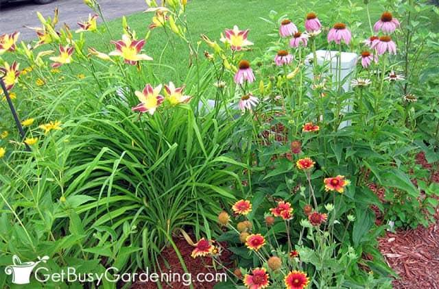 Lilien und Gaillardien neben der Straße gepflanzt